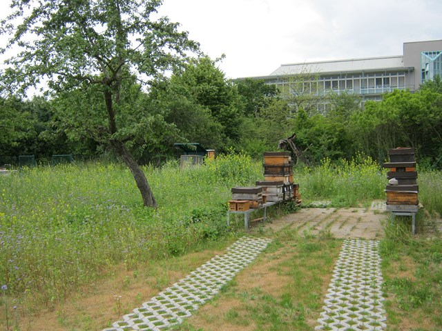 Pic:Beekeeping_1_Hives