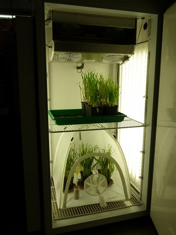 [Translate to Englisch:] Pic:ClimateChamber_experiment in a climate cabinet